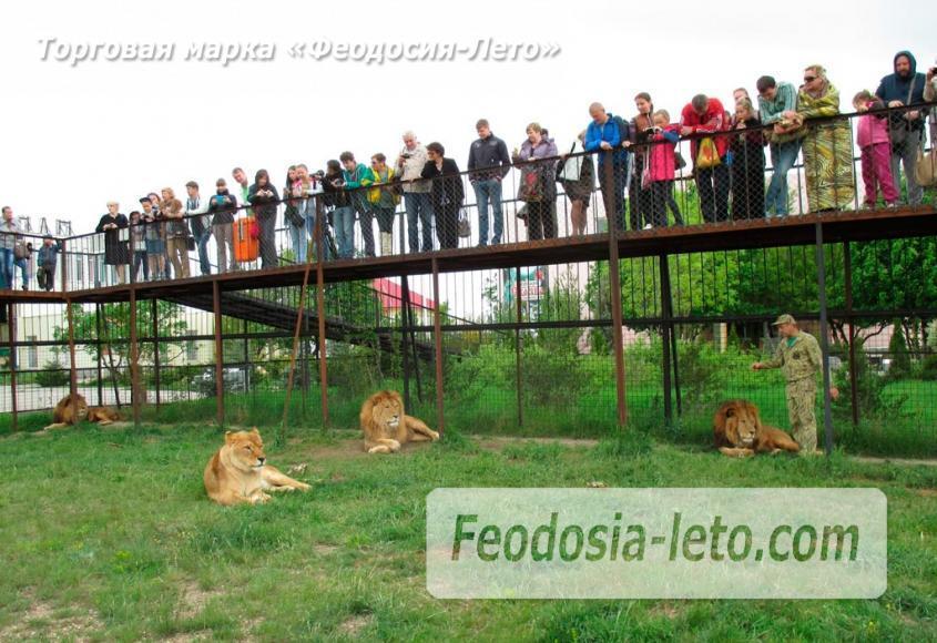Крым Белогорск парк львов Тайган - фотография № 10