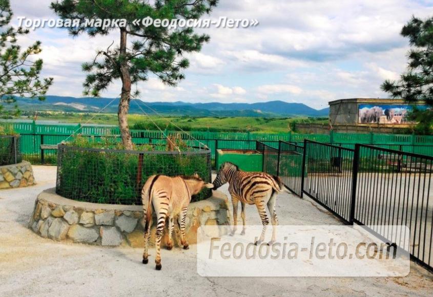 Крым Белогорск парк львов Тайган - фотография № 22