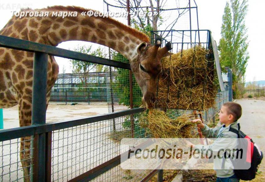 Крым Белогорск парк львов Тайган - фотография № 23