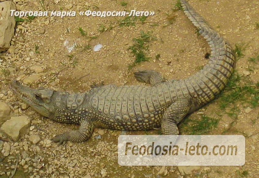 Крым Белогорск парк львов Тайган - фотография № 24