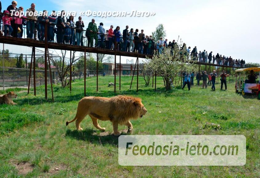 Крым Белогорск парк львов Тайган - фотография № 6