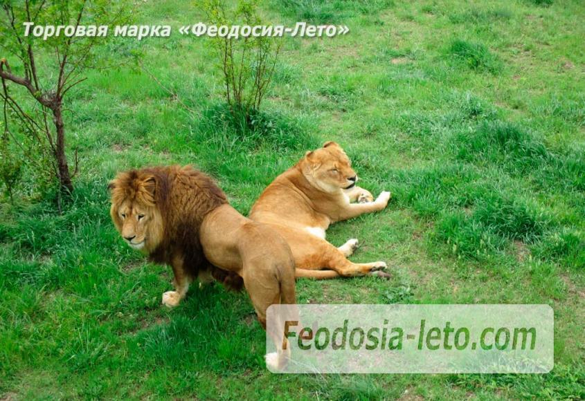 Крым Белогорск парк львов Тайган - фотография № 9