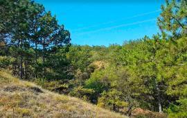 Экскурсии в Феодосии. Лес и Лысая гора